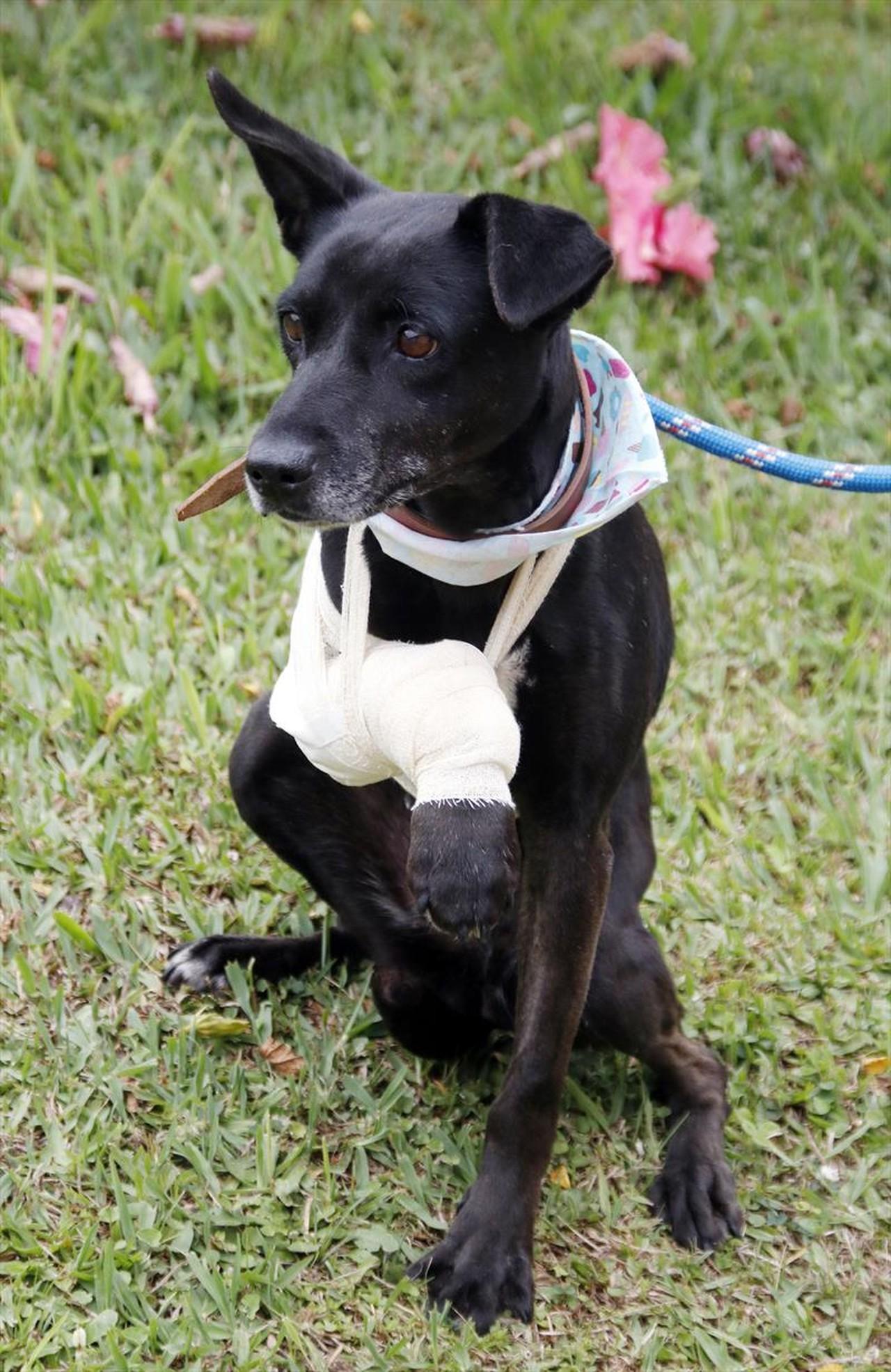 Samu veterinário resgate cachorros curitiba
