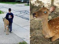 Antes de ir para a escola, menino ajuda cervo cego a procurar comida 9