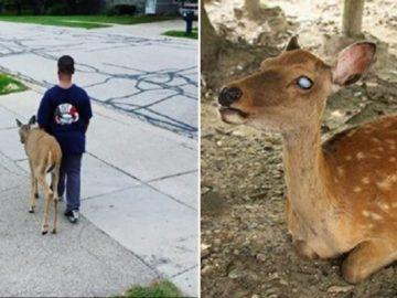 Antes de ir para a escola, menino ajuda cervo cego a procurar comida 12