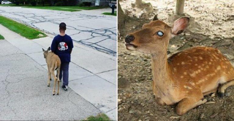 Antes de ir para a escola, menino ajuda cervo cego a procurar comida 3