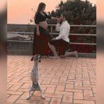 Cãozinho com deficiência brilha em ensaio fotográfico de gravidez de sua dona 1