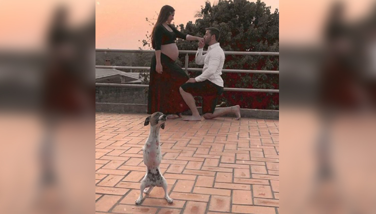 Cãozinho com deficiência brilha em ensaio fotográfico de gravidez de sua dona 2