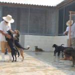 Animais abandonados abrem portas da ressocialização para presos do regime semiaberto 4