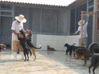 Animais abandonados abrem portas da ressocialização para presos do regime semiaberto 2