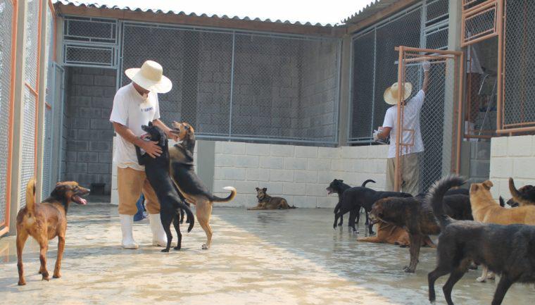 Animais abandonados abrem portas da ressocialização para presos do regime semiaberto 1