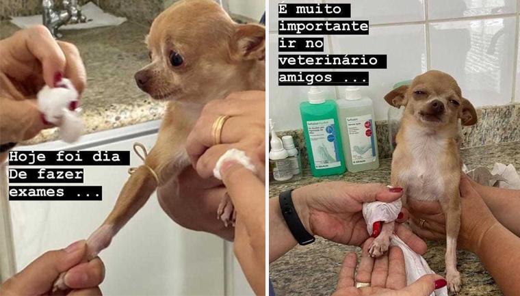 Último a ser adotado em pet shop, cãozinho vence doença e vira xodó da família em SP 5