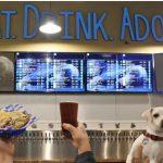Bar nos EUA abriga cães resgatados prontos para serem adotados 3