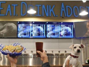 Bar nos EUA abriga cães resgatados prontos para serem adotados 1