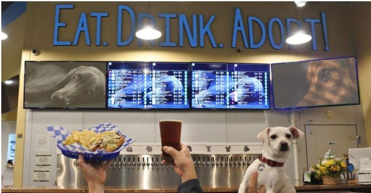 Bar nos EUA abriga cães resgatados prontos para serem adotados 5