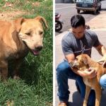 Jovem miss cria projeto para instalar bebedouros e comedouros para animais de rua (GO)