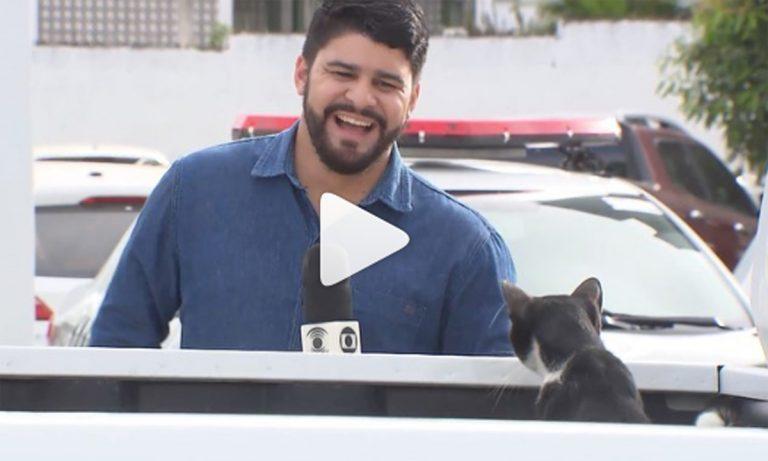 """Repórter quer adotar gatinho fofo que """"atrapalhou"""" gravação de matéria [VÍDEO] 1"""
