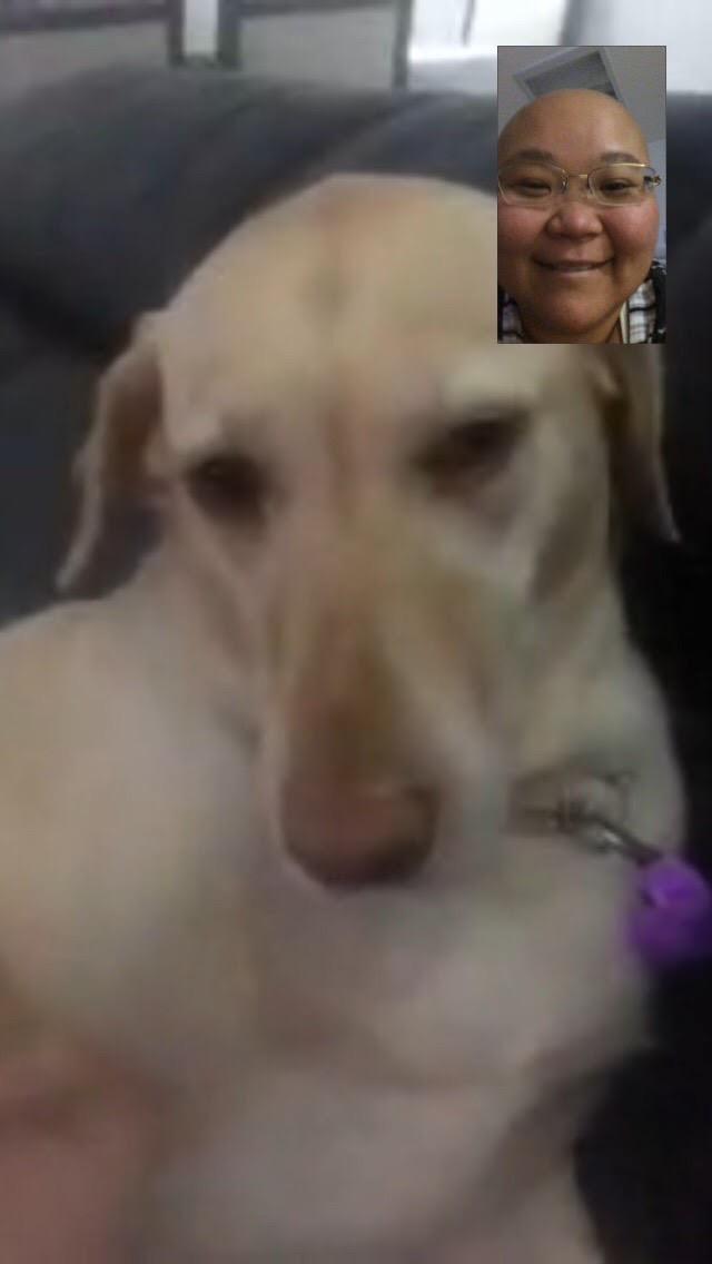 cachorra acompanha tratamento da dona com câncer