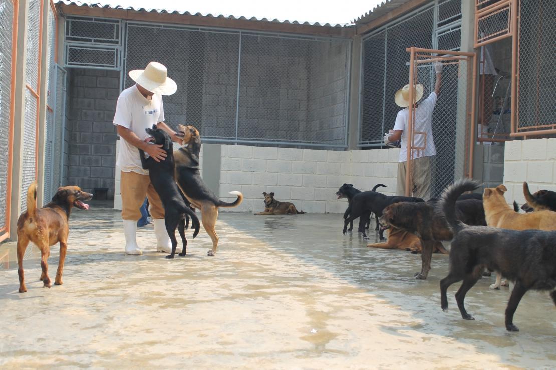 Detentos cuidam de animais em Taubaté