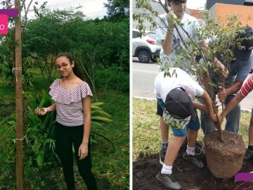 Garota de 13 anos mobiliza comunidade para reflorestar área de mata nativa em SP 1