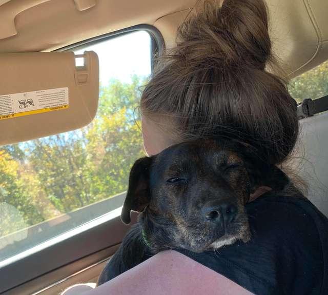mulher salva e adota cachorro que seria sacrificado