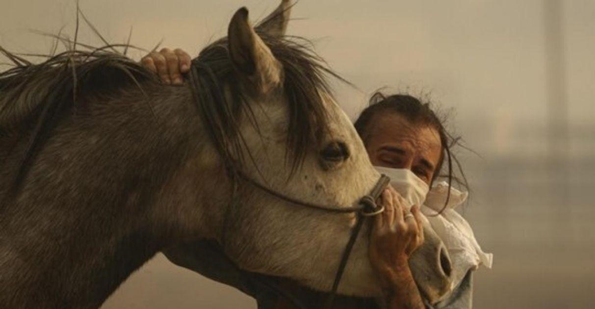 cavalo volta para salvar família incêndios califórnia