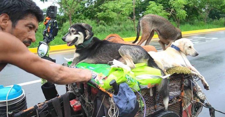 Eremita mexicano salva cães doentes feridos méxico