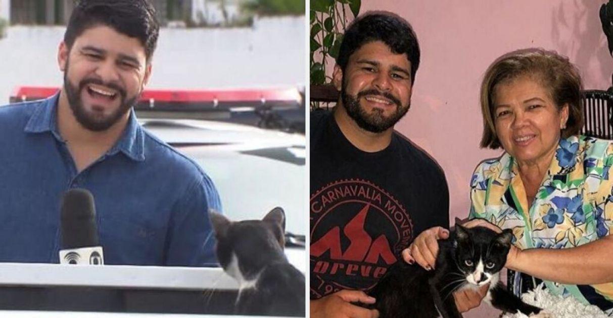 Tia de jornalista adota gato invadiu reportagem