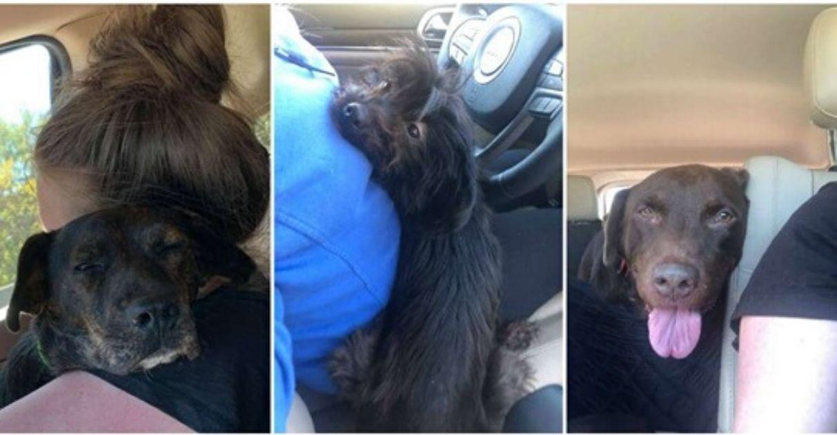 mulher salva e adota cão que seria sacrificado