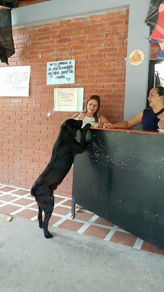 Cão tenta comprar biscoitos pagando com folhas