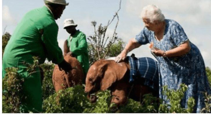 elefantes abraçam mulher que os salvou