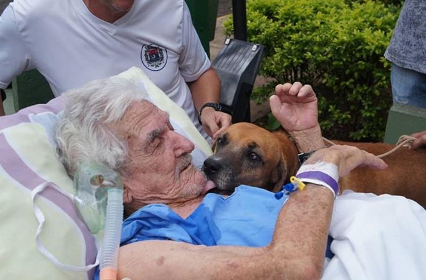 Cachorro visita dono idoso que está internado após sofrer queda