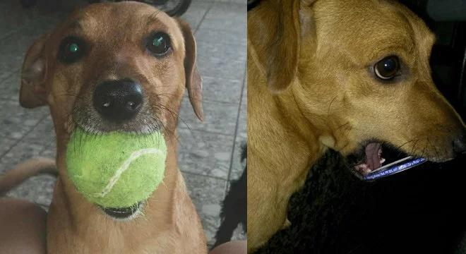 cachorro presenteia donos objetos que encontra