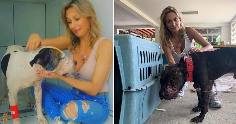 """Luisa Mell salva pitbulls de """"rinha"""": """"Não consigo me conformar"""" 1"""