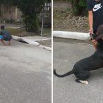 Cãozinho reencontra família após ficar um ano vivendo nas ruas de SP 2