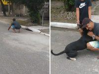 Cãozinho reencontra família após ficar um ano vivendo nas ruas de SP 8