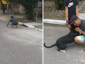 Cãozinho reencontra família após ficar um ano vivendo nas ruas de SP 1