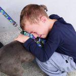 Menino chora ao reencontrar cachorro que foi roubado no PR; assista 2