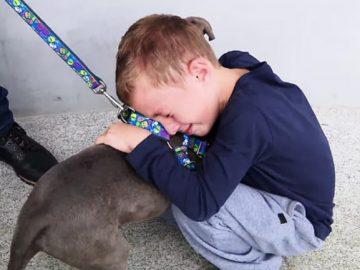 Menino chora ao reencontrar cachorro que foi roubado no PR; assista 8