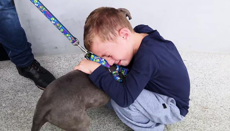 Menino chora ao reencontrar cachorro que foi roubado no PR; assista 1