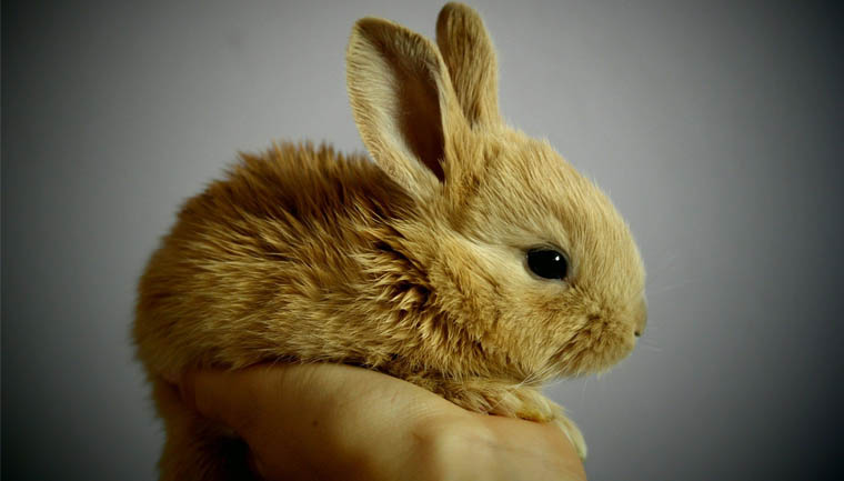 Avon anuncia fim de testes de produtos em animais na sua produção global 1