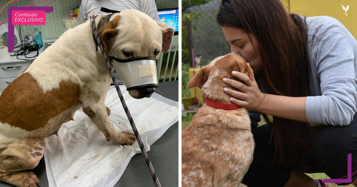 ONG que salvou pit bulls de rinha em Itu precisa de ajuda para cuidar dos cães