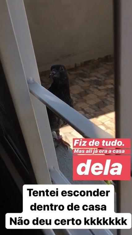 pomba adotada na janela de casa