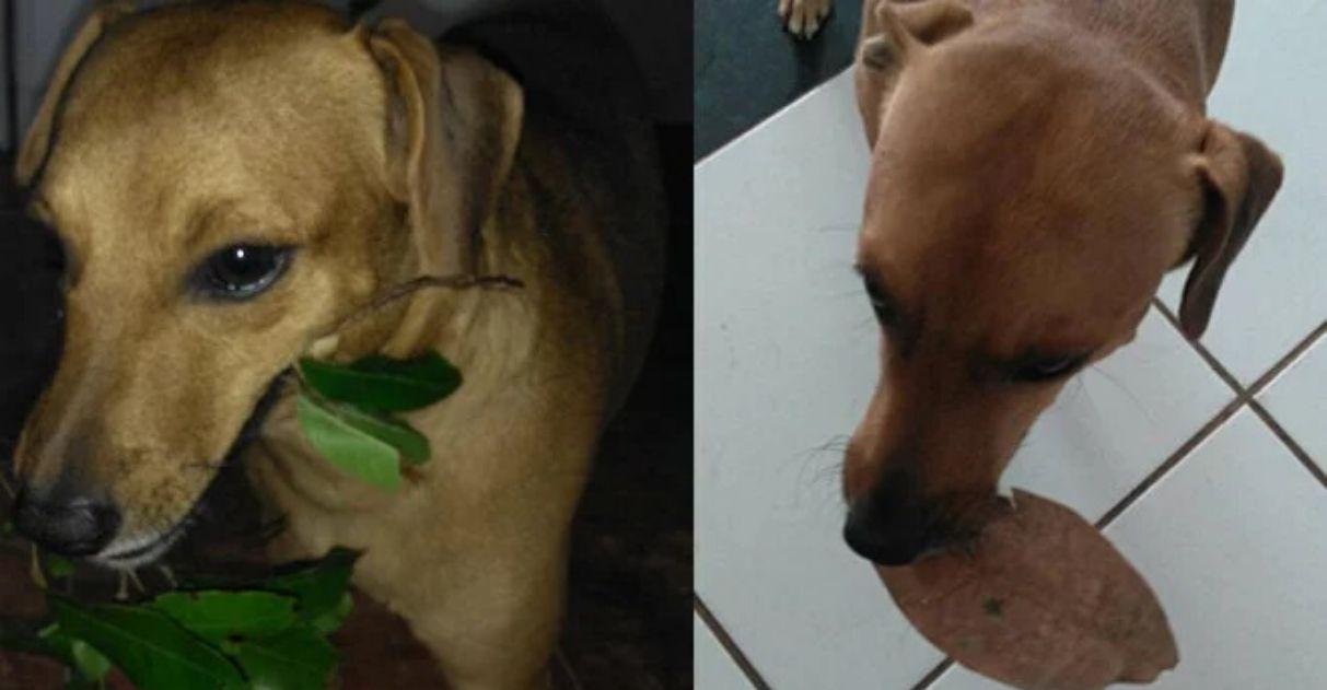 Cãozinho presenteia seus donos todos os dias com objetos que encontra pela frente 4