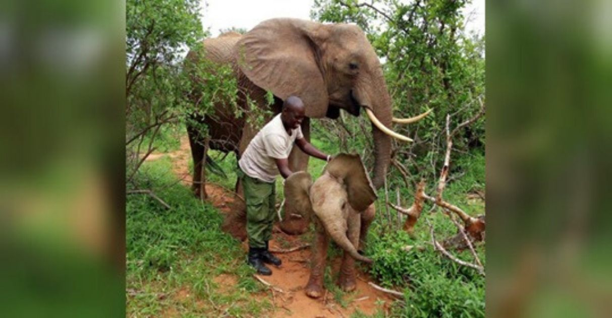 elefanta filhote recém-nascido