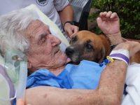 Cachorro visita dono que está internado após sofrer queda: 'Chorava para vê-lo' 7