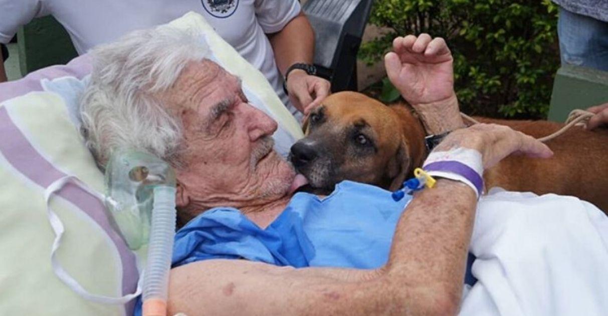 Cachorro visita dono que está internado após sofrer queda: 'Chorava para vê-lo' 1