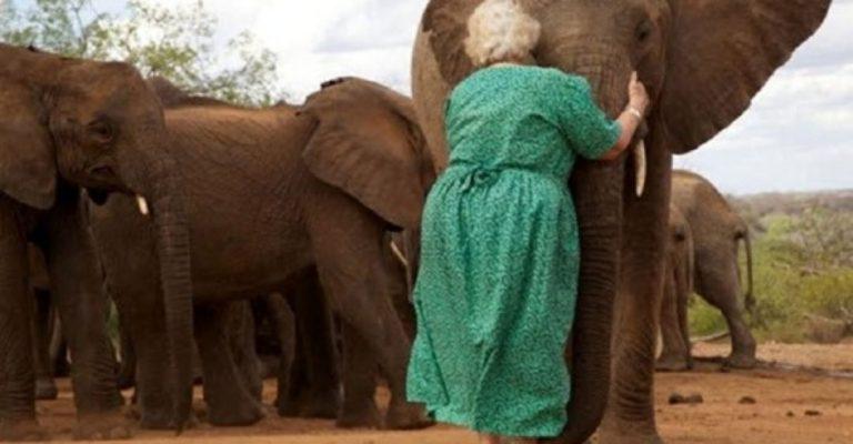 Em fila, elefantes órfãos abraçam mulher que os salvou de massacre