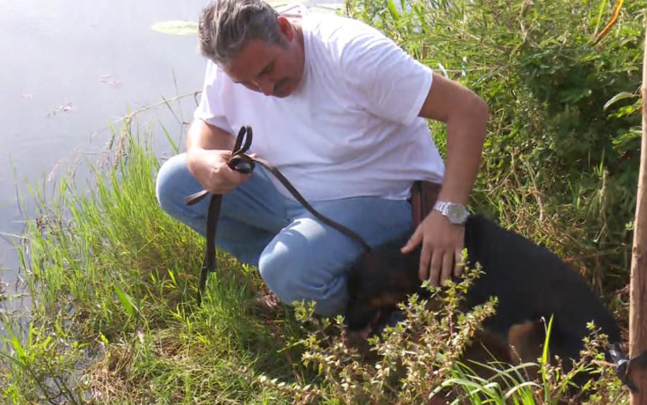 homem salvam cachorro ataque sucuri