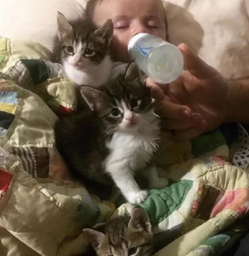 Gatinho ajuda mãe a amamentar bebê de 10 semanas; veja o vídeo 4