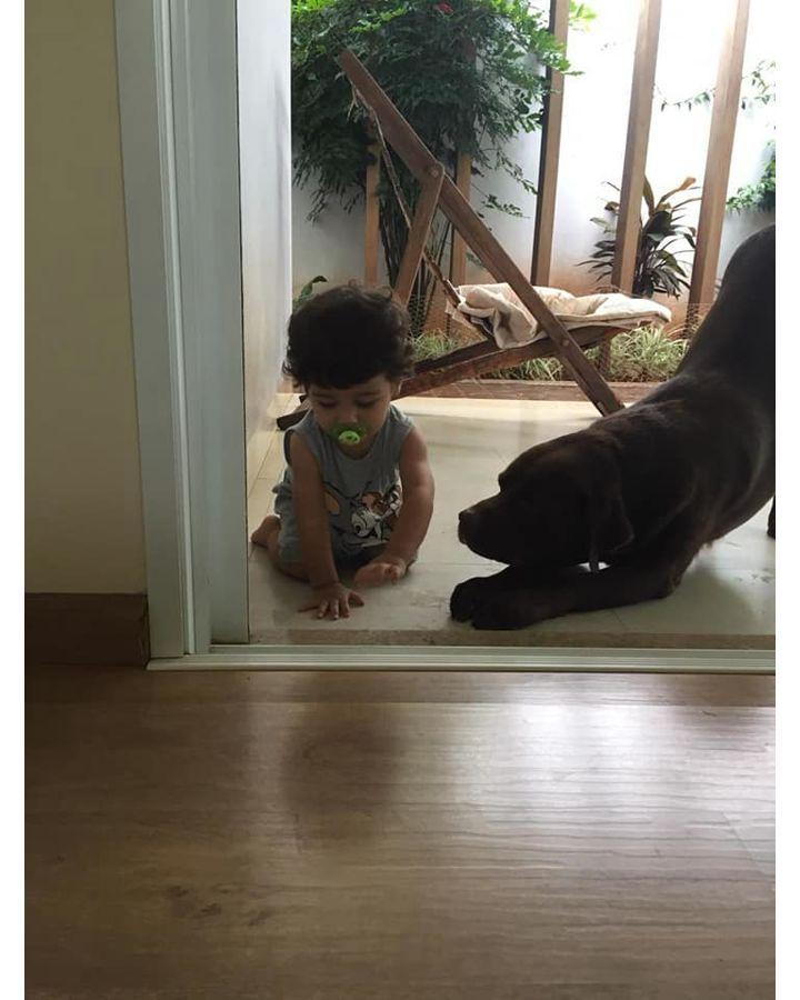 Cãozinho vira melhor amigo de menino autista