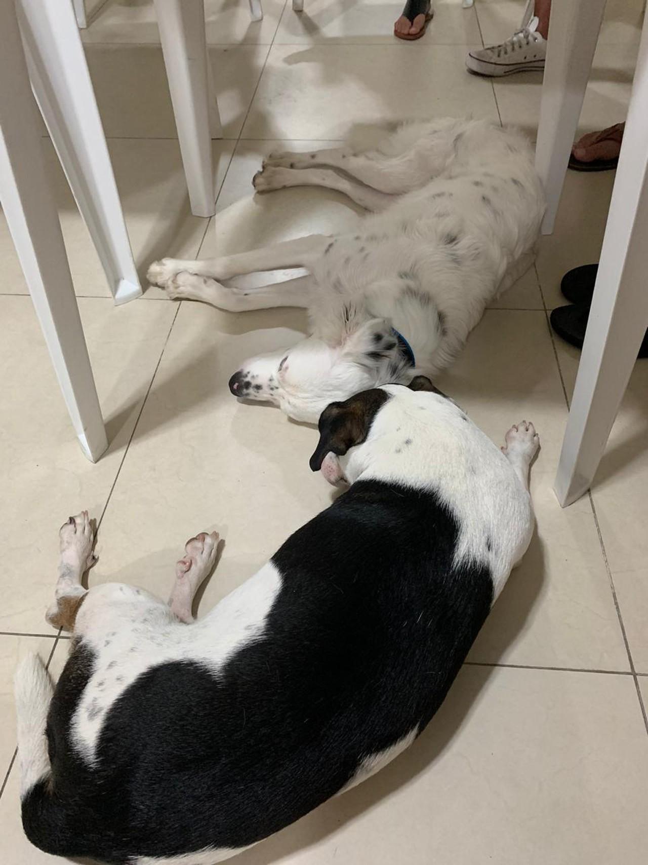 Cão devolvido ser surdo adotado estudante também surdo