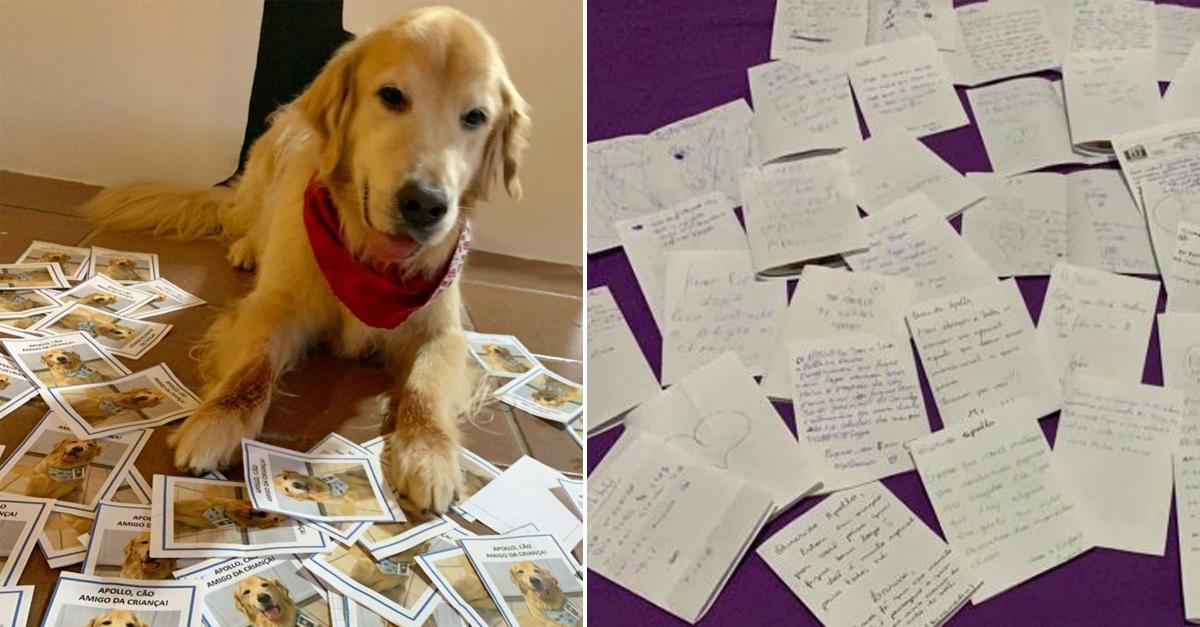 Crianças de hospital escrevem cartas com mensagens de amor para cãoterapeuta doente 9