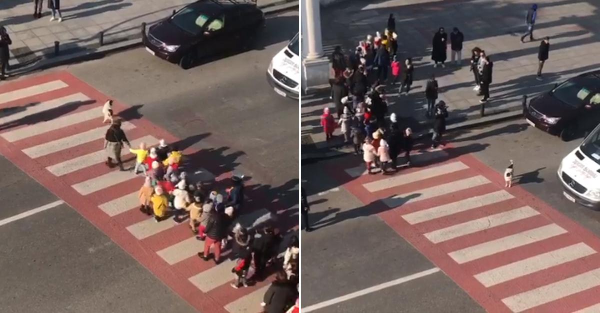 Cão interrompe trânsito para crianças atravessarem a rua 1
