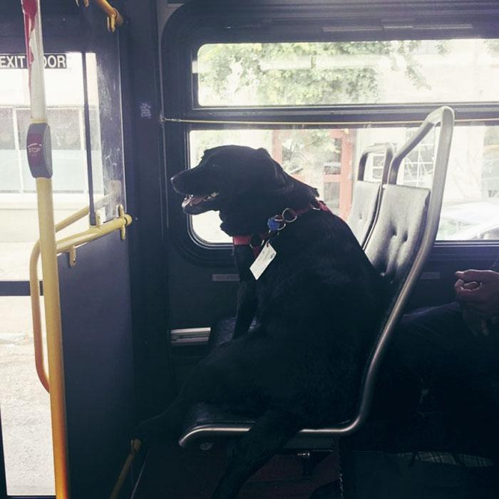 cachorrinha pega ônibus todo dia para ir ao parque