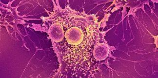 célula capaz de curar células cancerígenas do corpo